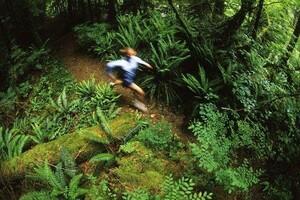 Immer mehr Menschen haben Lust auf Laufen in der Natur. Foto: picture-alliance