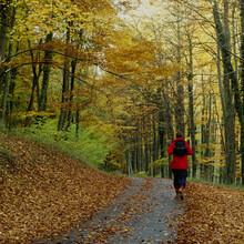 Wandern gehört noch immer zu den beliebten Aktivitäten im Wald. Foto: picture-alliance