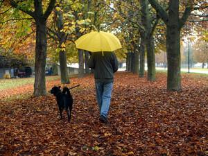 Auch wer täglich mit dem Hund spazieren geht, tut etwas für seine Gesundheit. Copyright: picture-alliance
