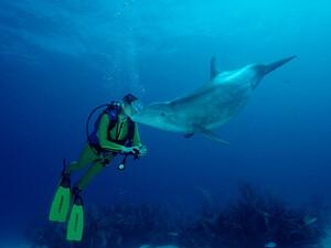 Der Verband Deutscher Sporttaucher (VDST) hat die Patenschaft für einen Adria-Delfin übernommen. Copyright: picture-alliance/Okapia