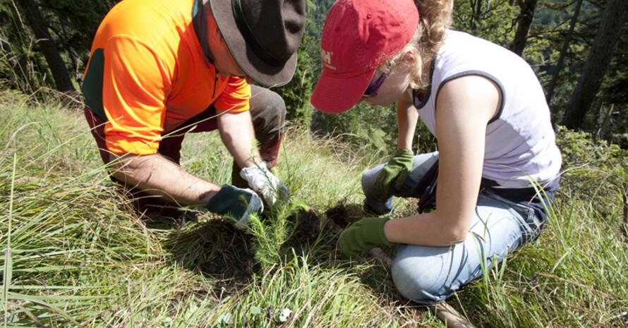 Freiwillige Helfer und Helferinnen bei der Schutzwaldpflege. Foto: DAV/Marco Kost