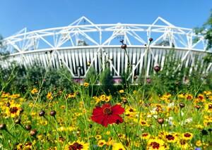 Blumen vor dem Olympiastadion in London, wo 2012 die Olympischen Sommerspiele stattfanden. Foto: picture-alliance