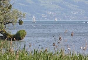 Der Lebensraum Wasser (hier: Bodensee) ist das diesjährige Schwerpunktthema des Deutschen Naturschutzpreises. Foto: Böcker