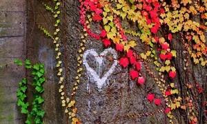 Wir lieben den Wald und benötigen Unterstützung für ihn. Foto: Yvonne Döring