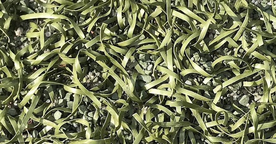 Auch in Kunststoffrasenflächen konnten PFAS nachgewiesen werden. Foto: DOSB/Dufft