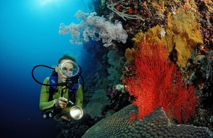 Riffe sind Frühwarnsysteme für globale Umweltveränderungen. Sporttaucher wollen sich deshalb für ihren Schutz einsetzen. Copyright: picture-alliance/dpa