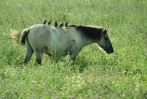 Biologische Vielfalt auf einer Pferdekoppel. Foto: Gerlinde Hoffmann