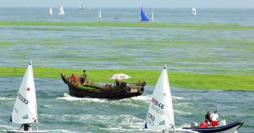 Schlagzeilen machte auch die vor einem Monat auftretende Algenpest im olympischen Segelrevier von Qingdao. Copyright: picture-alliance